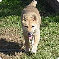 Adopt A Pet :: Gracie - Southern California, CA