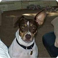 Adopt A Pet :: Quinn - Racine, WI