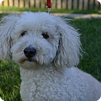 Adopt A Pet :: Toby ~ Adopted! - Troy, OH