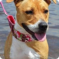Adopt A Pet :: Tillie - Framingham, MA