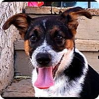 Adopt A Pet :: Decker - Bastrop, TX