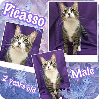 Domestic Shorthair Cat for adoption in Lexington, North Carolina - Picasso