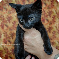 Adopt A Pet :: Gizmo - Marlton, NJ