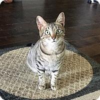 Adopt A Pet :: Dani - Gainesville, FL