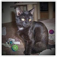 Adopt A Pet :: EBONY - Medford, WI