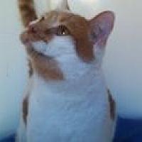 Adopt A Pet :: Mr. Blondie - Calimesa, CA