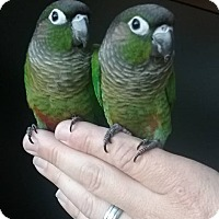 Adopt A Pet :: Babies - Redlands, CA