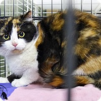 Adopt A Pet :: Nala - Marlinton, WV