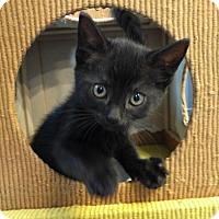Adopt A Pet :: BlackBerry - Corona, CA