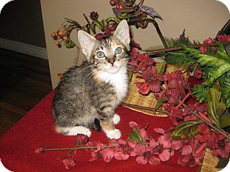 Domestic Shorthair Kitten for adoption in Clearfield, Utah - Tropicana