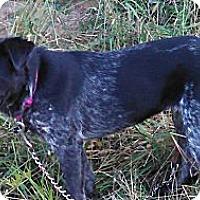 Adopt A Pet :: Jorie - Glastonbury, CT