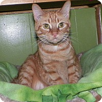 Adopt A Pet :: Peako - Dover, OH
