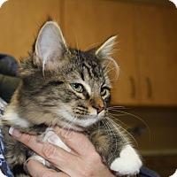 Adopt A Pet :: Krissi - Armuchee, GA