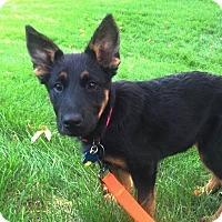 Adopt A Pet :: Gypsy - Denver, CO