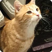 Adopt A Pet :: Casey - Adams, WI