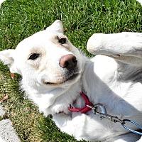 Adopt A Pet :: Sklya - Meridian, ID