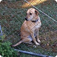 Adopt A Pet :: Lindsey - Irmo, SC