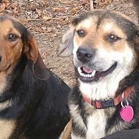 Adopt A Pet :: Precious - Columbia, KY