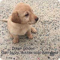 Adopt A Pet :: Dixie - Milton, GA