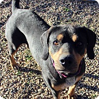 Adopt A Pet :: MARTELLA - Westminster, CO