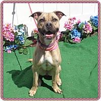 Adopt A Pet :: FRITZI - Marietta, GA