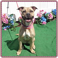 Adopt A Dog Marietta
