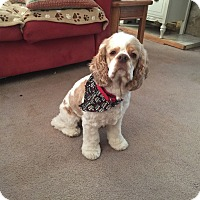 Adopt A Pet :: Prince 3yr - Mentor, OH