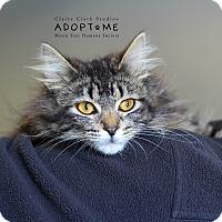 Adopt A Pet :: Jill - Edwardsville, IL