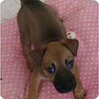 Adopt A Pet :: Sweet Tart - Willie Wonka - Phoenix, AZ