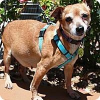 Adopt A Pet :: Grace - Gilbert, AZ