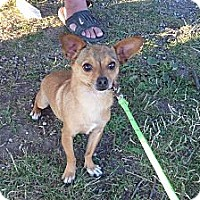 Adopt A Pet :: Pete - Chewelah, WA