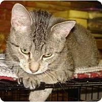Adopt A Pet :: Jasmine - Chesapeake, VA