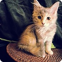 Adopt A Pet :: Roulette - Clearfield, UT