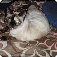 Adopt A Pet :: Twiggy - Everett, WA