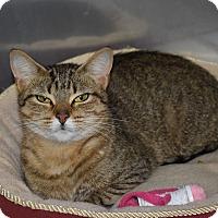 Adopt A Pet :: Porkie - Byron Center, MI