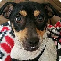 Adopt A Pet :: Lola - Fort Lauderdale, FL