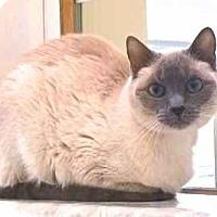Adopt A Pet :: Nilla - Davis, CA