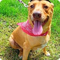 Adopt A Pet :: Lorna Diamond - Simsbury, CT