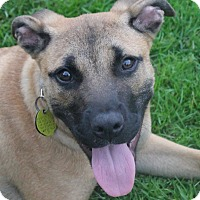 Adopt A Pet :: Rocco - North Olmsted, OH