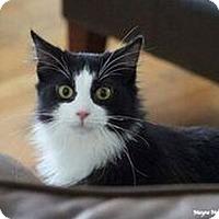 Adopt A Pet :: Jefferson - Huntsville, AL