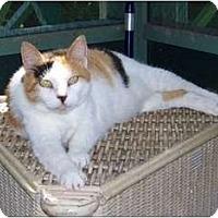 Adopt A Pet :: Honey Bunny - Makawao, HI