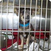 Adopt A Pet :: Lord Wedgwood - tiny 4 lb! - Phoenix, AZ