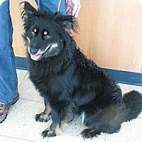 Adopt A Pet :: Burr - Ludington, MI