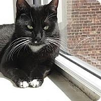Adopt A Pet :: Maxine, Ninja Cutie - Brooklyn, NY