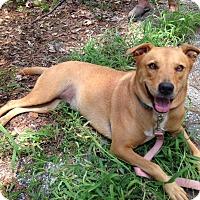 Adopt A Pet :: Peace - Edisto Island, SC