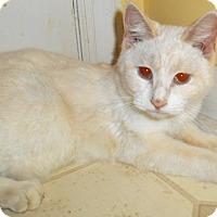 Adopt A Pet :: Celia - Chattanooga, TN