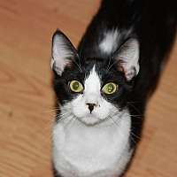 Adopt A Pet :: Frieda - Mesa, AZ