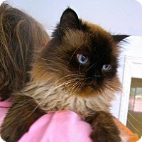 Adopt A Pet :: Pierre - Davis, CA