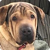 Adopt A Pet :: Jax - Barnegat Light, NJ