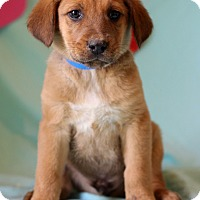 Adopt A Pet :: Kevin - Waldorf, MD